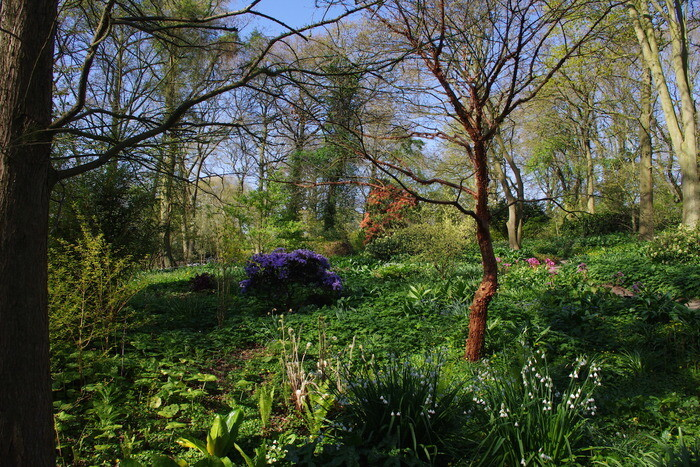 Springtime shade plants in the woodland