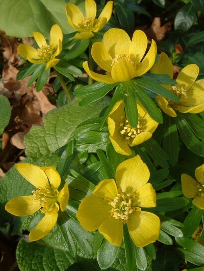 Top 10 early spring plants