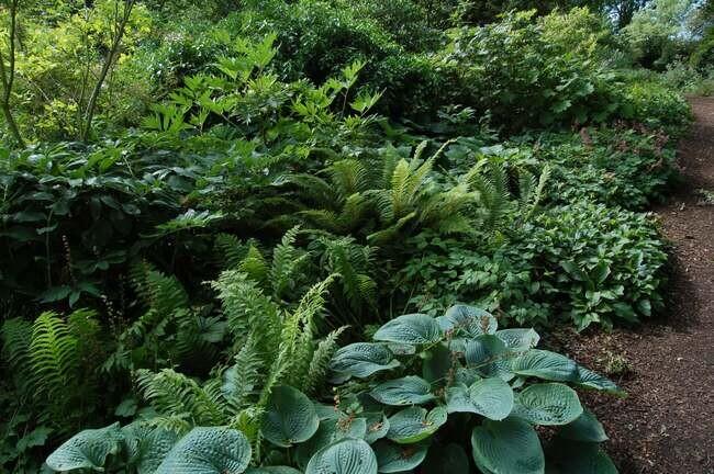 Beth Chattos Woodland Garden