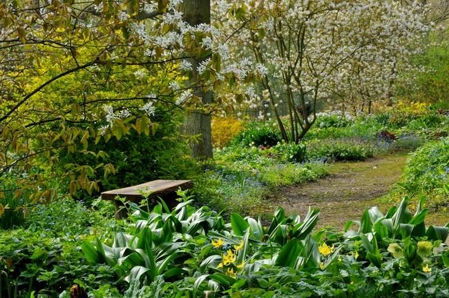 Beth Chattos Woodland Garden – Woodland Garden Plants