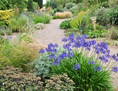 the beth chatto gardens gravel garden