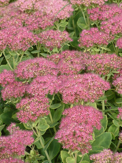 Top 10 plants for Autumn Interest