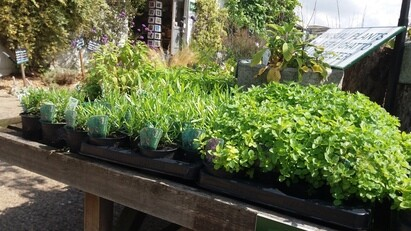 How to grow herbs and what to do with them