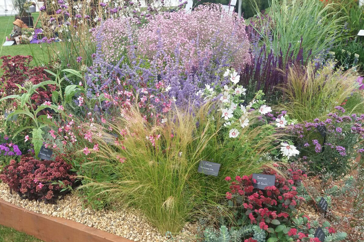 Plants from the RHS Wisley Flower Show