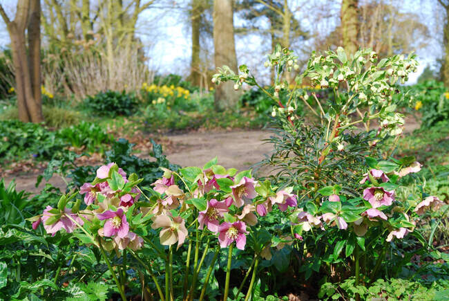 Beth Chatto's Woodland Garden